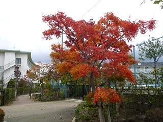 20121111福島の紅葉(その25)