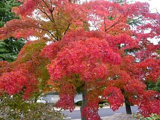 20121111福島の紅葉(その26)