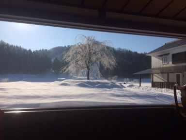 裏庭の冬景色