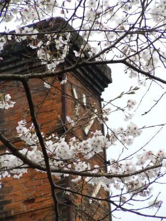 桜と煙突(2013-03-24)