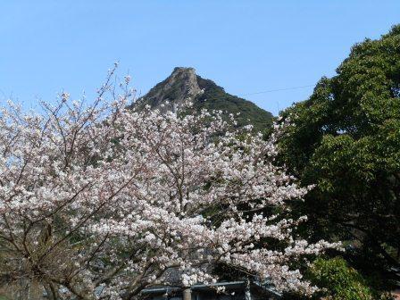 泉山の桜(2013-03-22)