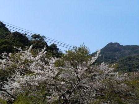 龍門峡の桜1(2013-03-30)