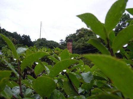 雨上がりの朝1(2013-06-10)