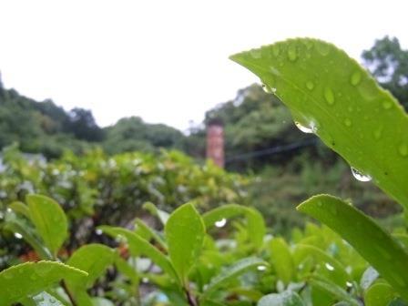 雨上がりの朝2(2013-06-10)