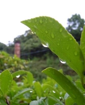 雨上がりの朝4(2013-06-10)