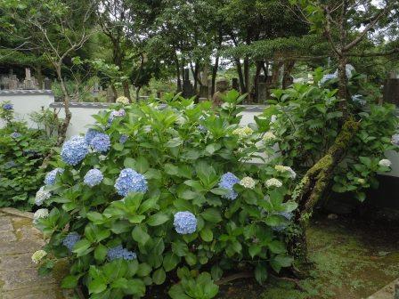 西光寺4(2013-06-23)