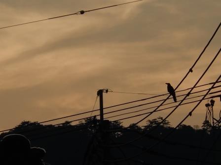 夕暮れ時(2013-08-11)