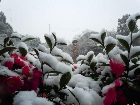 雪1(2014-02-06)