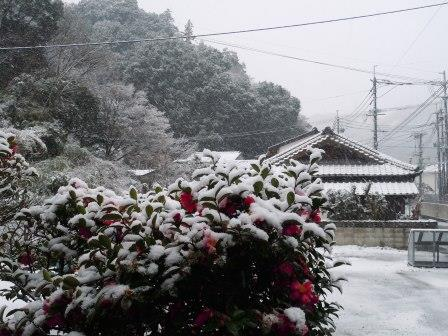 雪4(2014-02-06)
