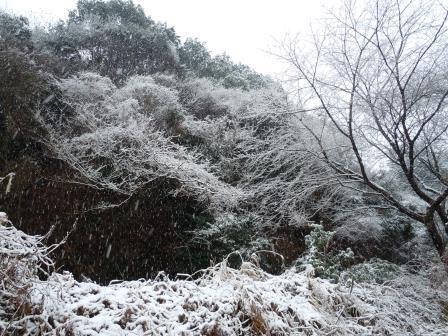 雪5(2014-02-06)