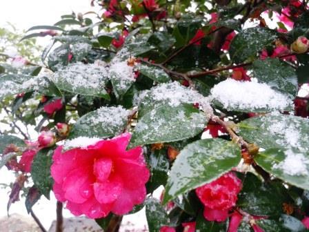 雪11(2014-02-06)