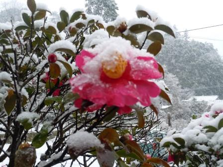 雪17(2014‐02-06)