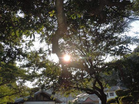 木漏れ日1(2013-08-09)
