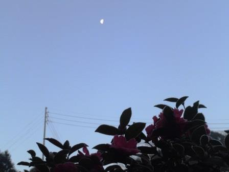 下弦の月1(2014-01-23)