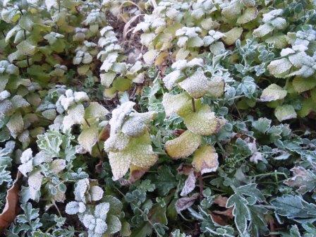 凍てつく朝2(2014-01-23)