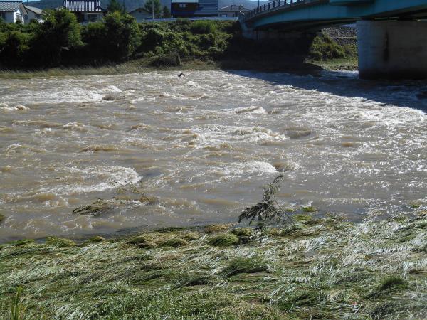 台風後の千曲川2