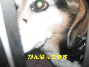 004_201401081911165ca.jpg