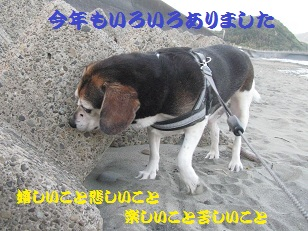 021_201312310741200fe.jpg