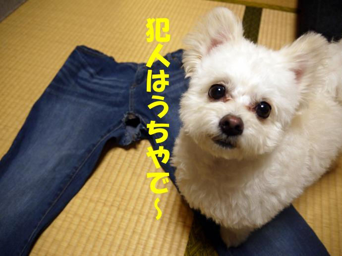 P1060516_convert_20130519005059.jpg