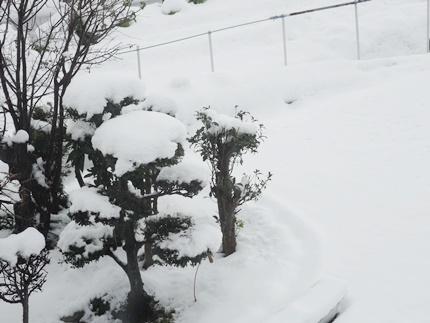12月雪1