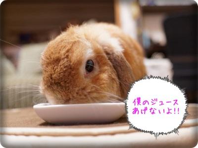 cookieblo1310084.jpg
