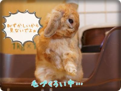 cookieblo1310206.jpg