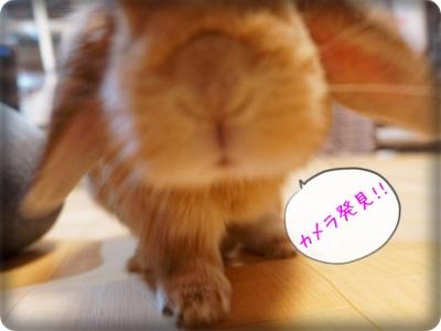 cookieblo1311052.jpg