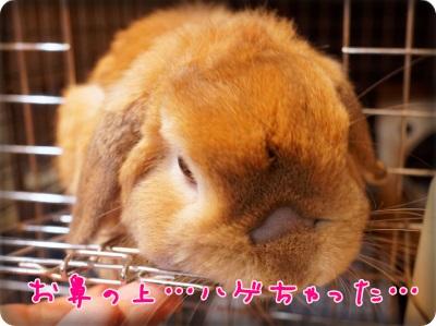 cookieblo13111201.jpg