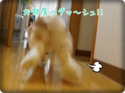 whipblo1310015.jpg