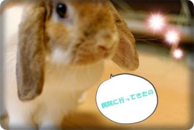whipblo8311_DxO.jpg