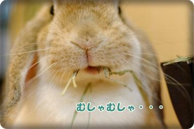 whipblo8313_DxO.jpg