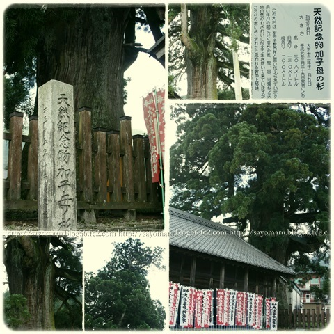 sayomaru6-135.jpg