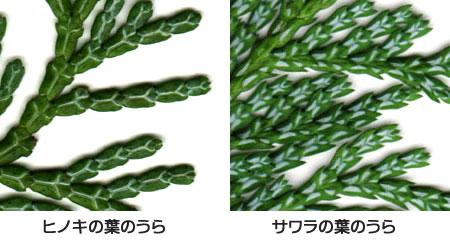 sayomaru6-211.jpg