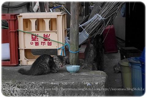 sayomaru7-7.jpg