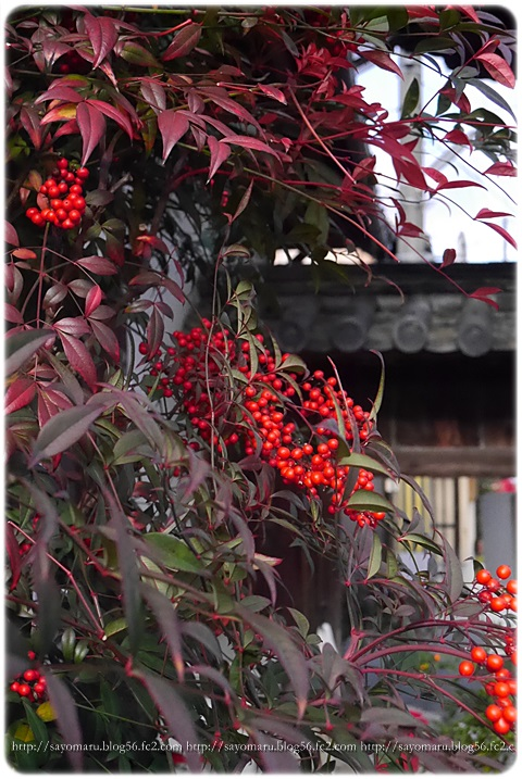 sayomaru8-172.jpg