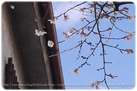 sayomaru8-341.jpg