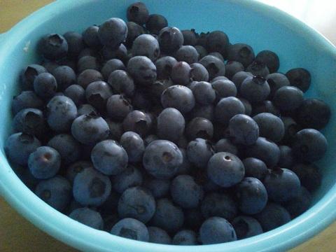 blueberry_0623