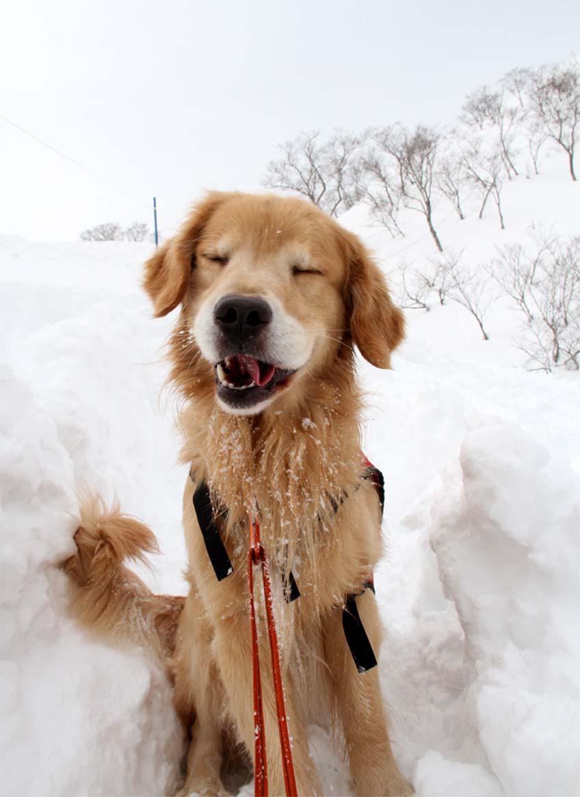 2014 関東雪崩(1)