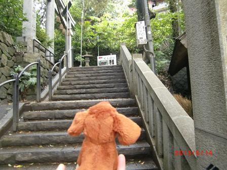 階段も登る、エスカーには乗らないゾ