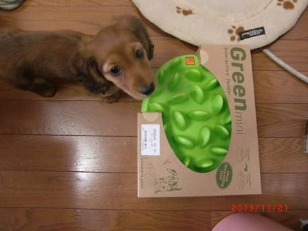 早食い防止のグリーンミニ