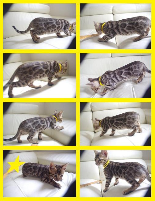 El Kitten 31