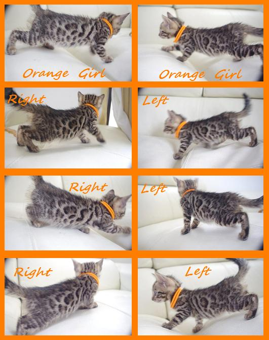 Any Kitten Orange Girl 1