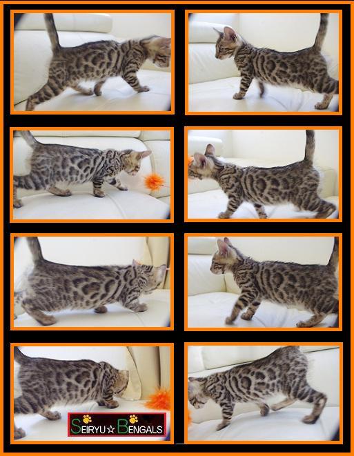 2013 Any Kitten Orenge 2