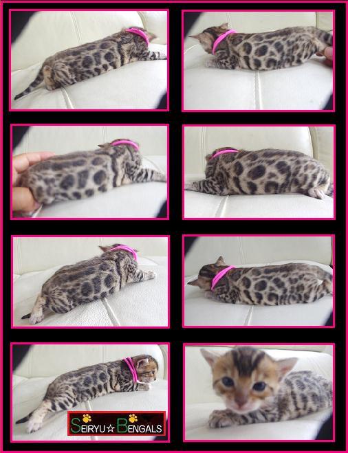 2013 RARA Kitten 1