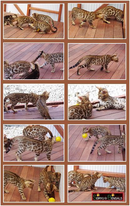 CAS Kitten 8