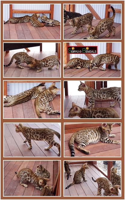 CAS Kitten9