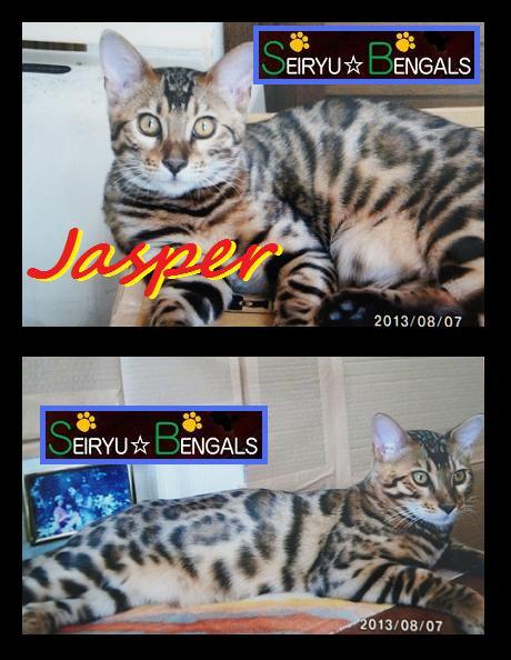 ジャスパー君