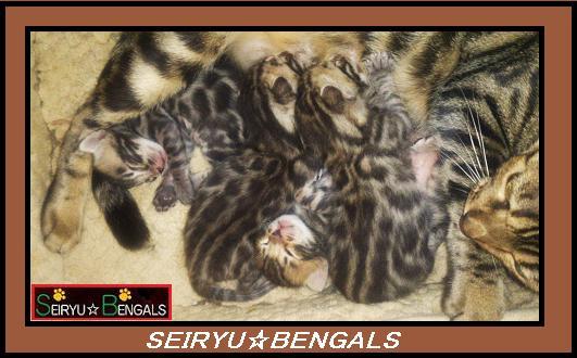 2013SH Kitten 1