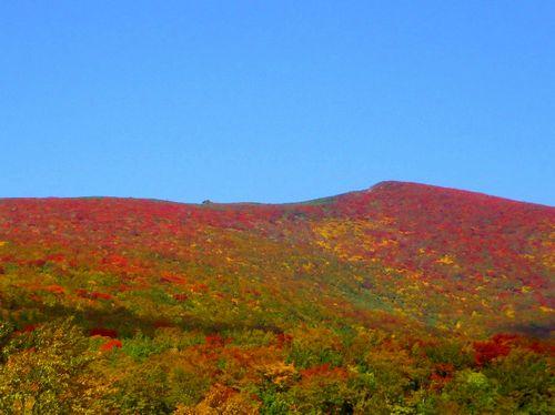 たびねす栗駒山いわかがみ平1