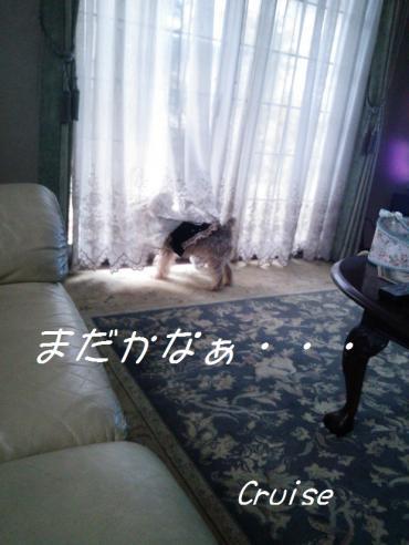 DSC_0318_convert_20130430201907.jpg
